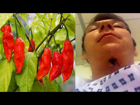 10 Spiciest Chill Peppers In The World