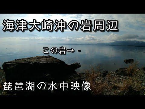 #琵琶湖 #水中映像  海津大崎売店の西の岩周辺