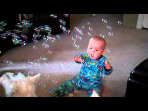 Baby Laughing At Dog Eating Bubbles