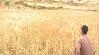 Amaizing Quail hunting pakistan