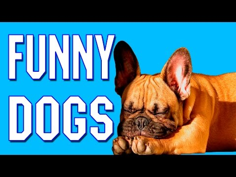 Funny Dog Videos 2016 – Funny Dogs Compilation May 2016 – Funny Dogs 2016