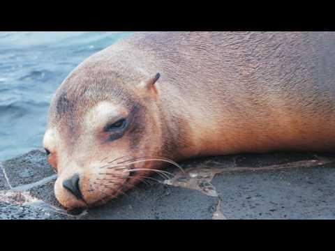 Galapagos Islands - September 2015