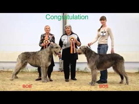 Dog Show Stuhr Irish Wolfhound Club