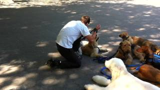 Zen-k9 Training Dogs In Central Park 2.