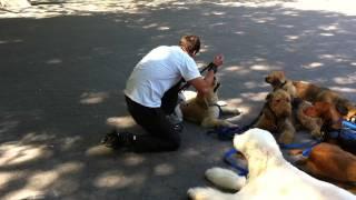 Zen-k9 Training Dogs In Central Park 2.