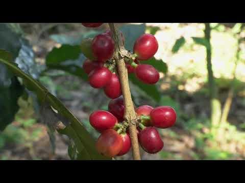 Veracruz Agropecuario - Finca de Café de Especialidad
