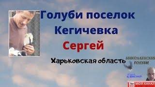 Голуби поселок Кегичевка Харьковская область
