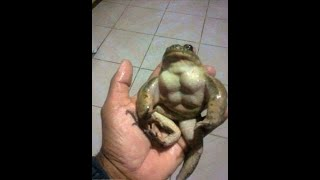 Funny Cute Frog Compilation