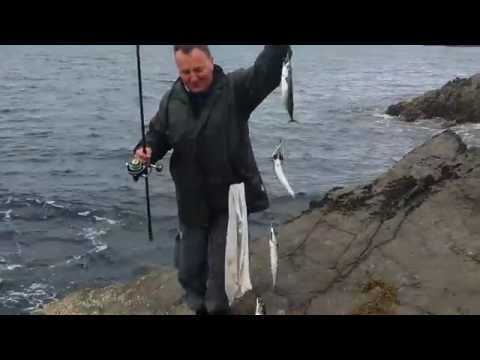 How To Catch Mackerel In Ireland ( By Fishing Rod )