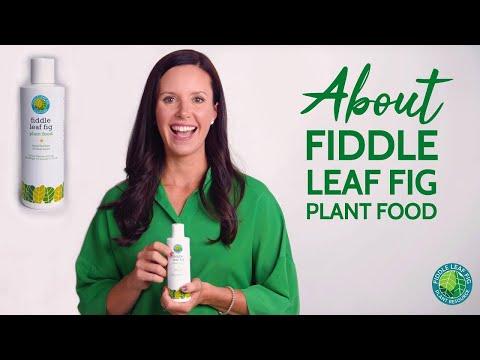 About Fiddle Leaf Fig Plant Food | Fiddle Leaf Fig Plant Resource Center