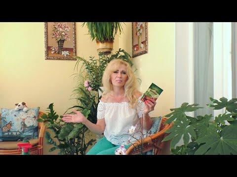 Мошки в орхидеях как избавиться в домашних условиях