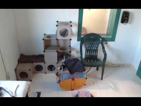 Cat Care Society Kitten Cam Live Stream