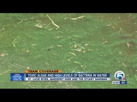 Toxic algae confirmed in St. Lucie River
