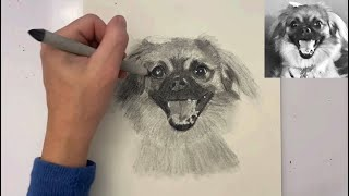 A speed drawing featuring Gin the Tibetan spaniel mix.