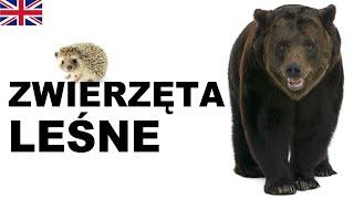 Learn Polish Vocabulary - Forest animals (Zwierzęta leśne)