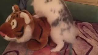 Sex Banny vs tiger. Кролик против тигра)))