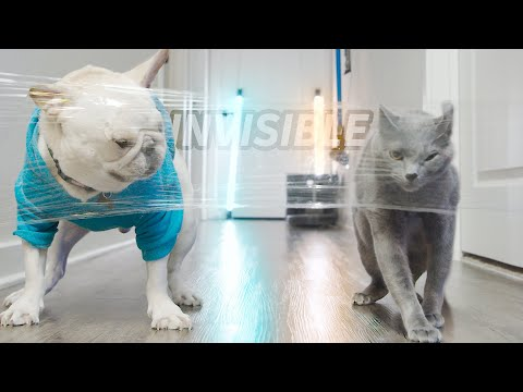 Dog vs Cat - Invisible Wall Challenge