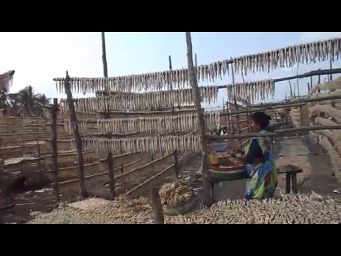 Dry Fish Industry of Arnala Fishing Village in Viar city of Mumbai