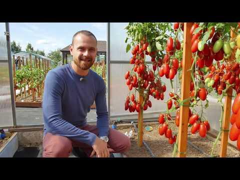 Вопрос: Томат сорта Halfmoon Tomato кто сажал, описание, отзывы и фото?