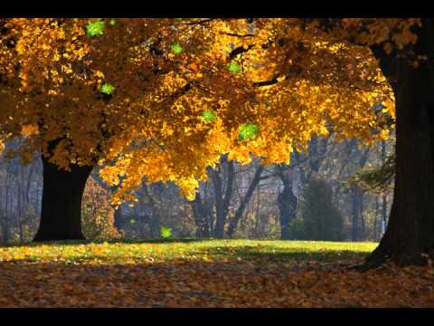 Fall Of The Autumn Hd Wallpaper Arbol Que Cae Hojas Youtube