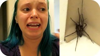 One of Bumble Baylee's most viewed videos: BAYLEE VS SPIDER