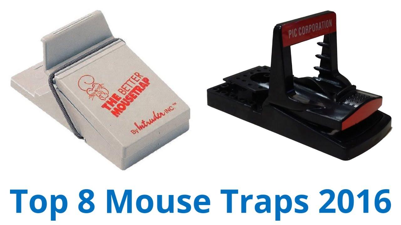 8 Best Mouse Traps 2016