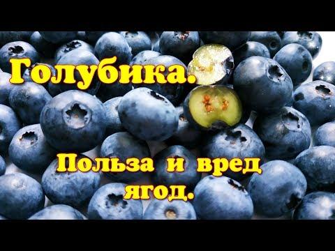 Чем полезна Голубика? Полезные и вредные свойства ягод.