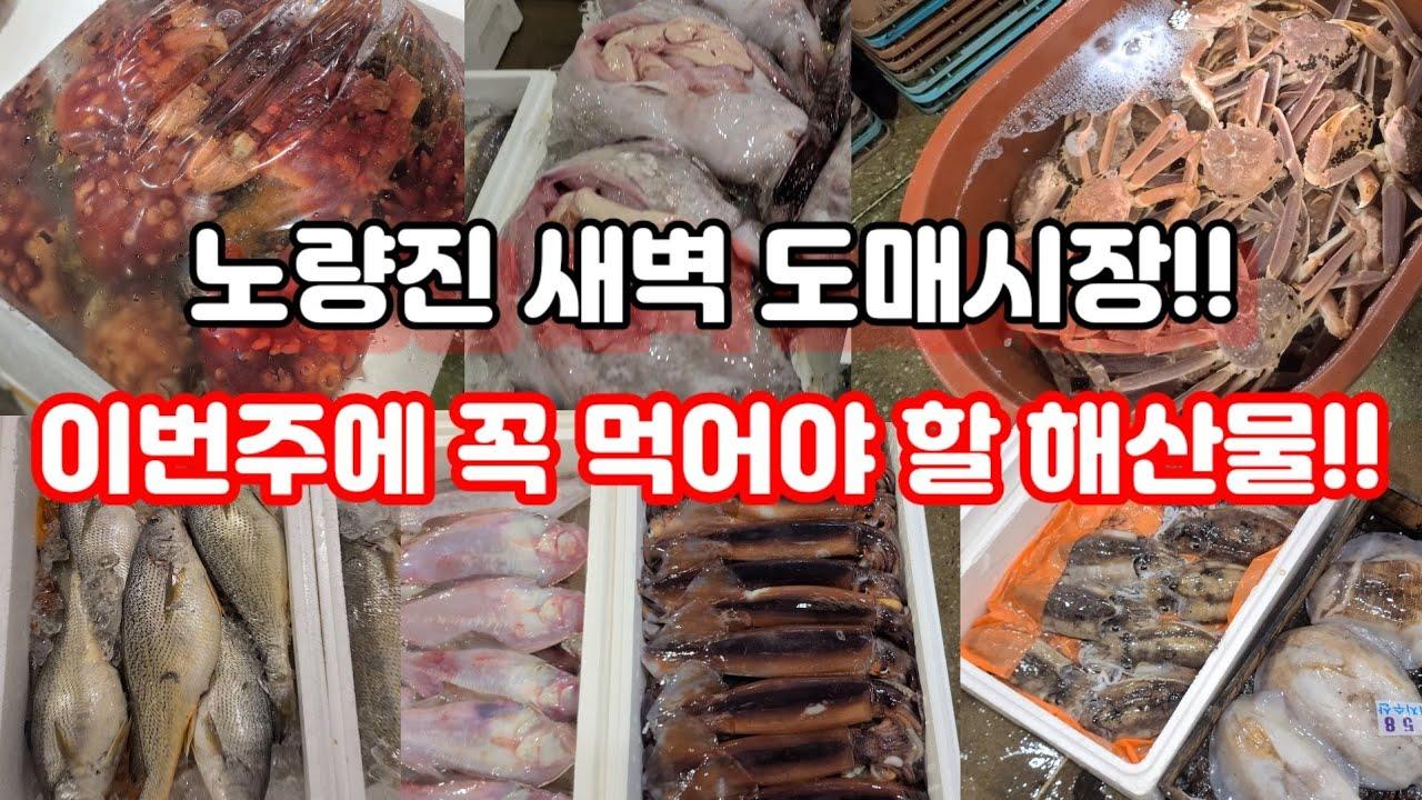 노량진 새벽 도매시장 이번주에는 이 해산물을 꼭 드셔야합니다!!!