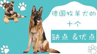 德国牧羊犬的十个优缺点请想清楚再决定要不要养德国牧羊犬点CC看字幕