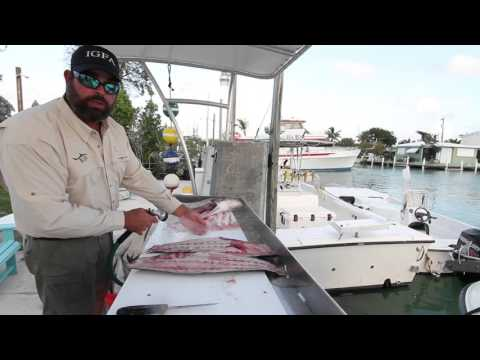 How To Filet Cobia