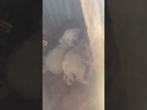 Neglected Momma dog and puppies with NO escape