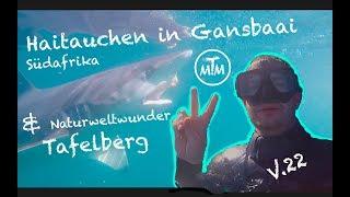 Haitauchen in Gansbaai und Naturweltwunder Tafelberg - Vlog 22