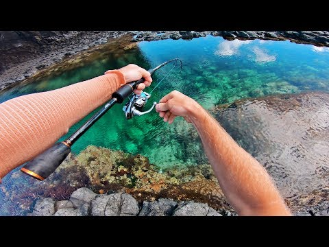 Amazing Fishing In Crystal Clear Rock Pools!