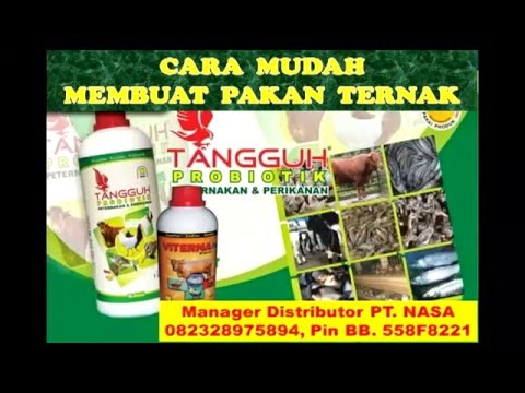 CARA BETERNAK  KAMBING TANPA NGARIT TANPA ANGON 082328975894