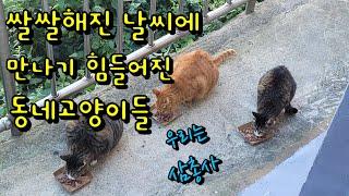 [삼총사]쌀쌀해진 날씨에 칼퇴근하는 동네고양이들 만나기…