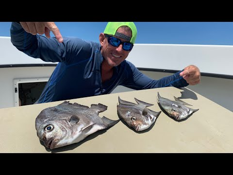 ATLANTIC SPADEFISH Catch Clean & Cook BLUEGABE Style While Swimming With Giant Groupers