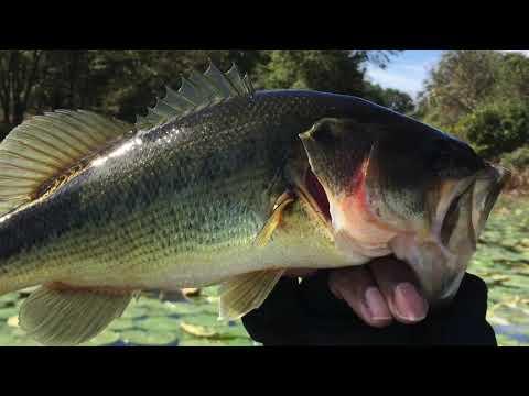 Piney Run (Ep88) Bass Fishing
