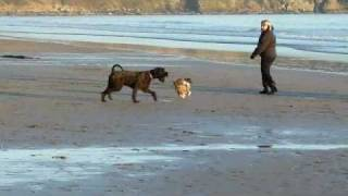 Dogs Beach Party