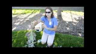 Drying Perennials - A Meijer Gardens Gardening Tip