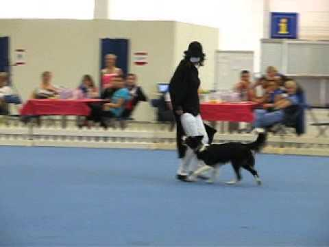 Anima Free to Run - MS dogdancing 2014, Helsinki