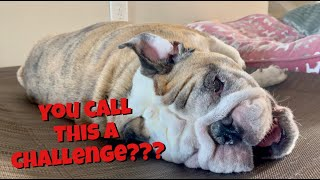 Reuben the Bulldog: The Ear Cleaner Challenge