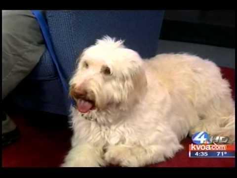 Mobile Dog Training Tucson