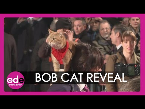 A Street Cat Named Bob: 'Bob whacked the director'