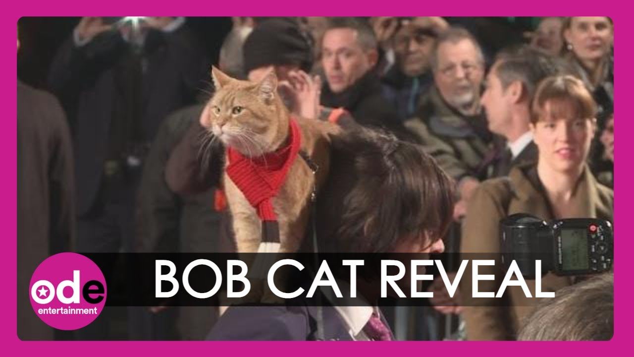 Image result for a street cat named bob premiere