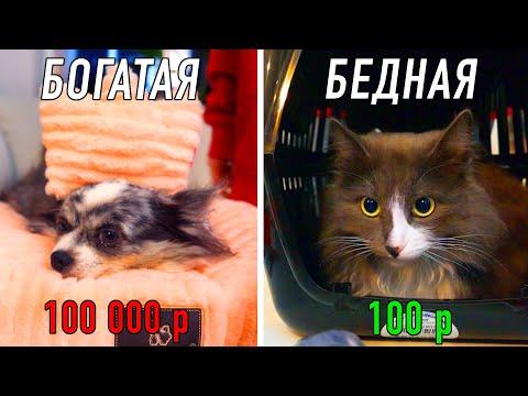 Что купить собаке и кошке на 100 и 100 000 рублей в зоомагазине? Подарки Дешево Дорого питомцам