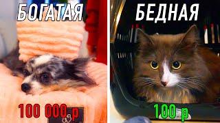 Дёшево Дорого Покупки на 100 000 для питомцев Что я купила собакам и кошке Подарки из зоомагазина
