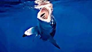HUGE Great White Shark (LUNA) Stalks our Fishing boat! ( Charleston SC) May 11th 2019