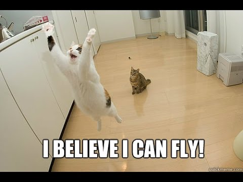 Funny Cat 2017 ● I Believe I Can Fly