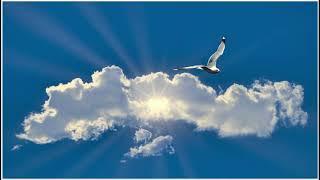 Meditace Tvoření ve svobodě