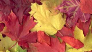 C'est l'automne